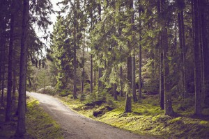 Einer von vielen Waldwegen - ideal zum Wandern und Biken in Haus im Ennstal - es ist ein dichter Wald mit breitem Waldweg zu erkennen